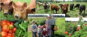 Shaun Alf Farm